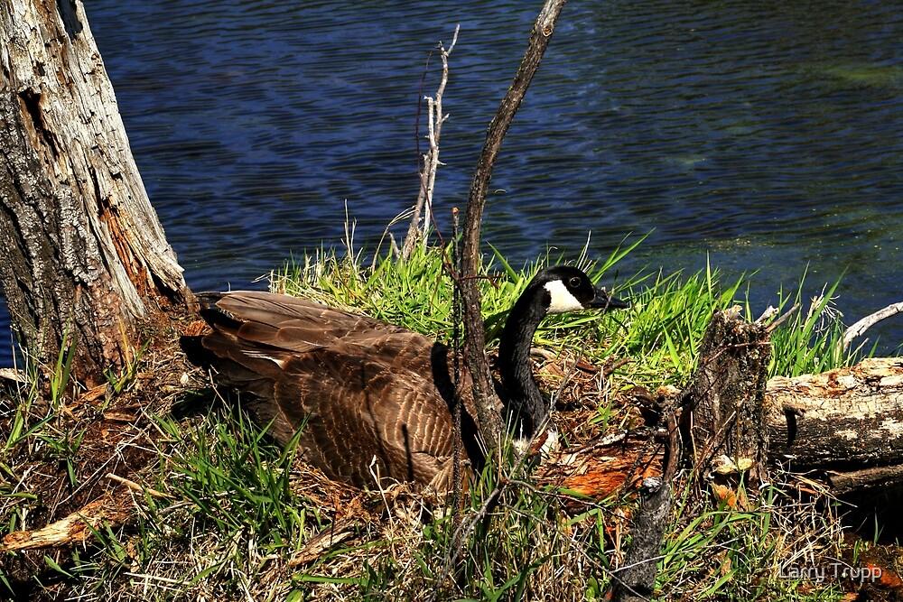 Shhh...She's Nesting by Larry Trupp