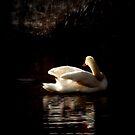 Hidden somewhere in your dream by Brian Bo Mei