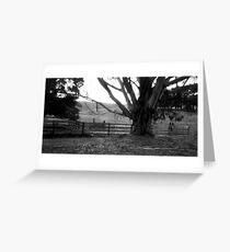 Old gum tree 2 - Dykes Bridge  Greeting Card