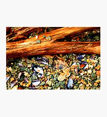 Patagonian Shore Photographic Print