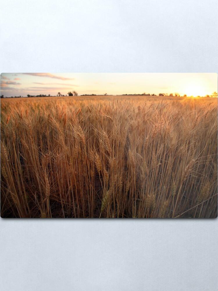 Alternate view of Golden Flakes of Wheat, Victoria, Australia Metal Print