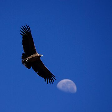 Flight of the  Condor by mattstreatfeild