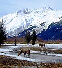 Wildlife Near Portage, Alaska by John Carpenter