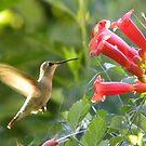 Adorable Hummingbird by Zoe Marlowe