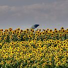 Artist Among the Sunflowers by Monica M. Scanlan