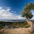 Olive Tree by Aleksandar Topalovic