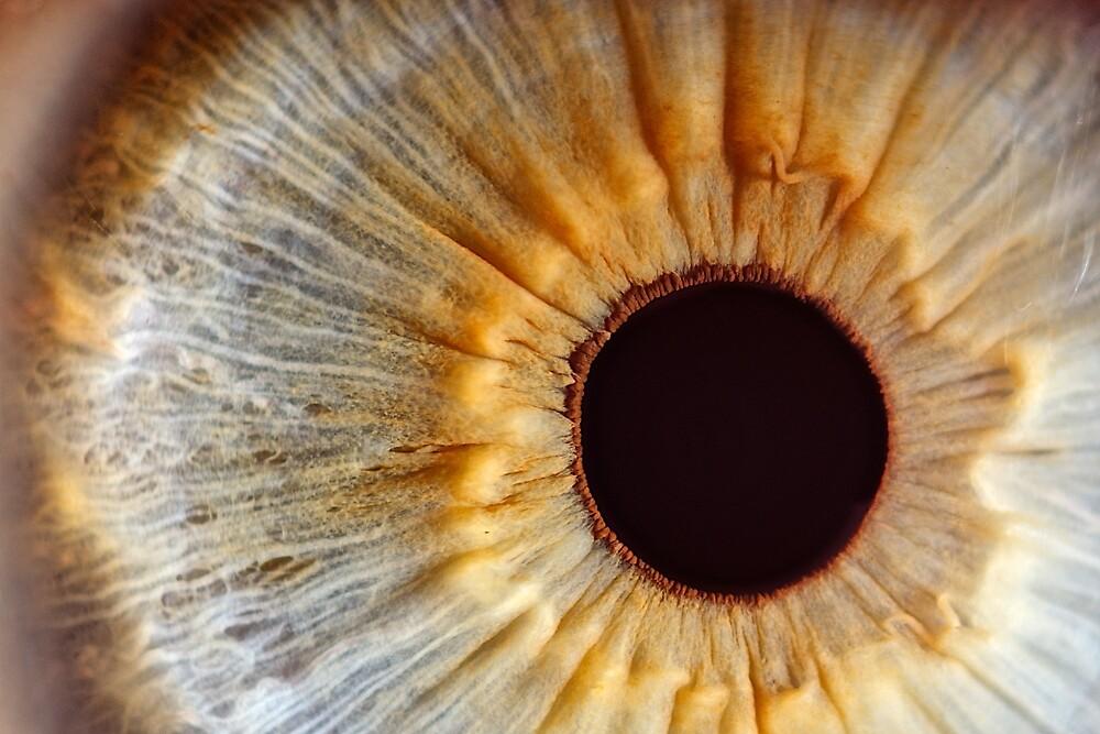 Galaxy eye by nicomazz