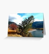 The leaning tree .  Greeting Card