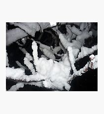 snow on branch - close up Photographic Print