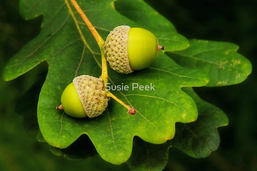 Mighty Oaks From Little Acorns Grow by Susie Peek