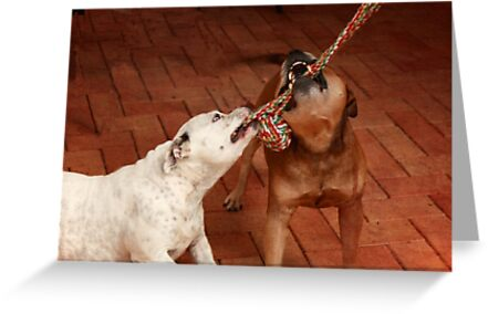 Friendship is Sharing a Rope by Elaine Teague