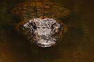 Everglades Alligator by Joe Elliott