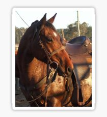 Rodeo pick up horse Sticker