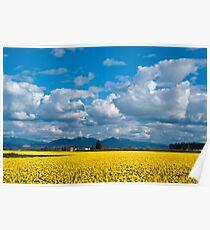 Skagit Daffodil Fields Poster