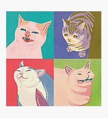 Four Meme Cats of the Apocalypse Photographic Print