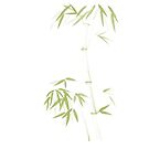 Gentle green bamboo stalk asian design with bushy leaves on white art print by AwenArtPrints