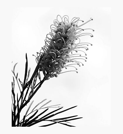 Flora in B/W Photographic Print