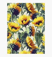 Sunflowers Forever Photographic Print