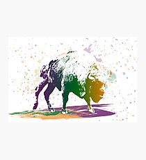 Bison in a colour storm Photographic Print