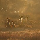 Kangaroos at sunset by JuliaKHarwood