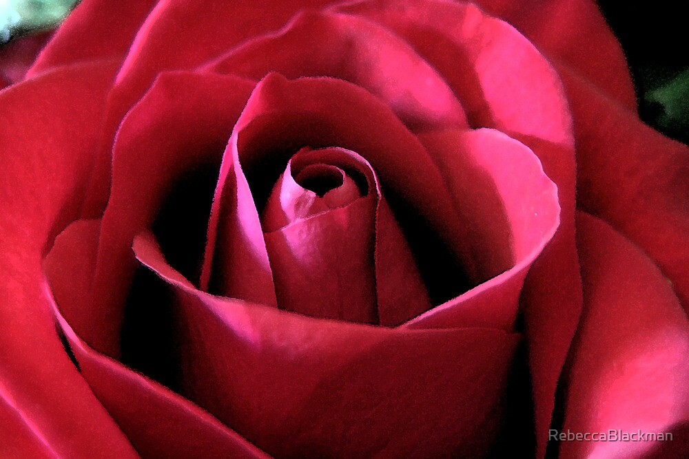 Red Red Rose by RebeccaBlackman