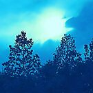 Late Day Sun Above Trees Blue by KnutsonKr8tions
