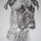 Brindle Boxer dog by Peter Lawton