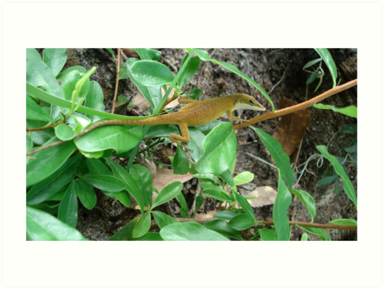August Anole by May Lattanzio