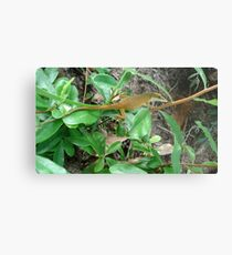 August Anole Metal Print