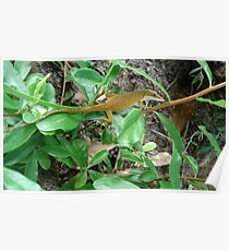August Anole Poster