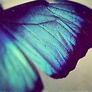 Black and Blue Wing by ameliakayphotog