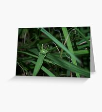 Tiny little baby grasshoppers  Greeting Card