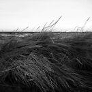 Sea by Bluesrose