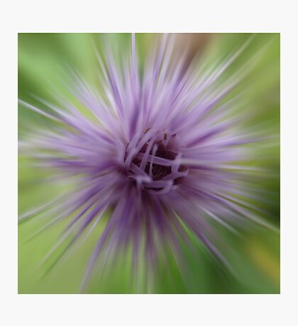 Thistle star Photographic Print