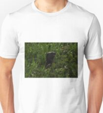I Otter be in Pictures T-Shirt