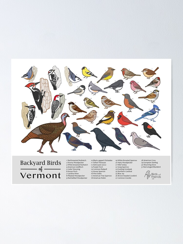 """Vermont - Backyard Birds of Vermont Field Guide Print ..."