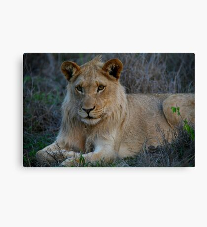 Young King Canvas Print