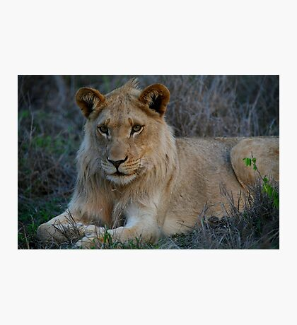 Young King Photographic Print