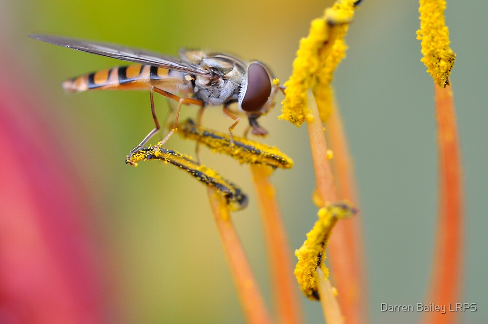 Pollen Hoover by Darren Bailey LRPS