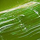 GreenDay by Lynne Prestebak