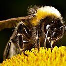 Bee Approaching by Gareth Jones