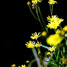 Weeds 140810b by Raoul Isidro