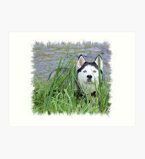 Skye- Blue Husky Art Print