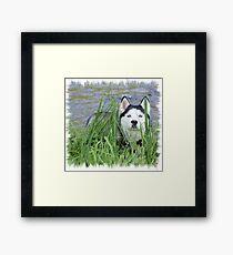 Skye- Blue Husky Framed Print