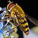 Hoverfly On Blue by Gareth Jones