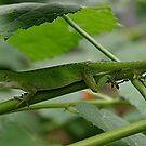 Lying Lizard by Alison M