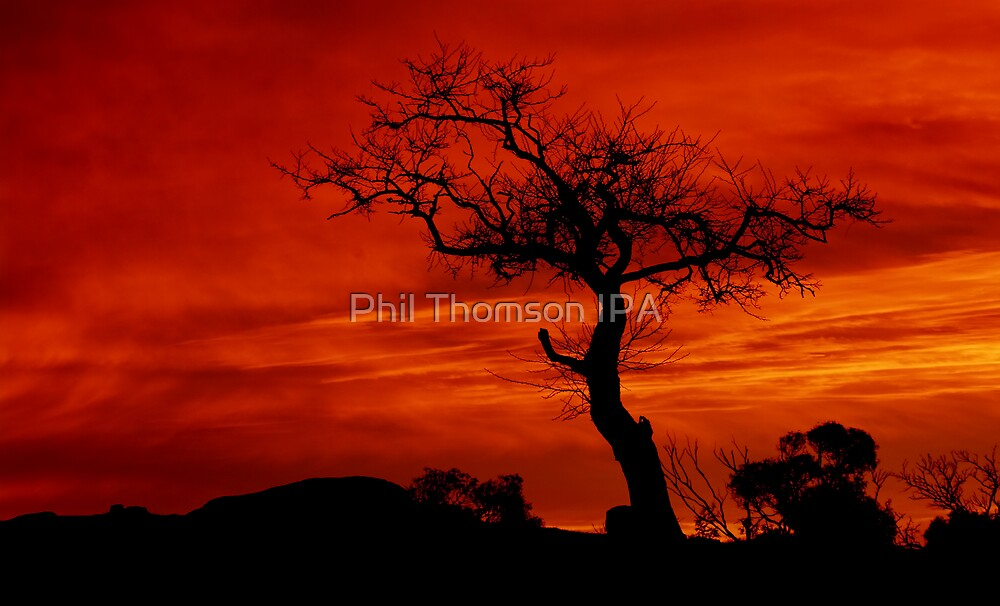 """Silhouettes at Sunrise"" by Phil Thomson IPA"