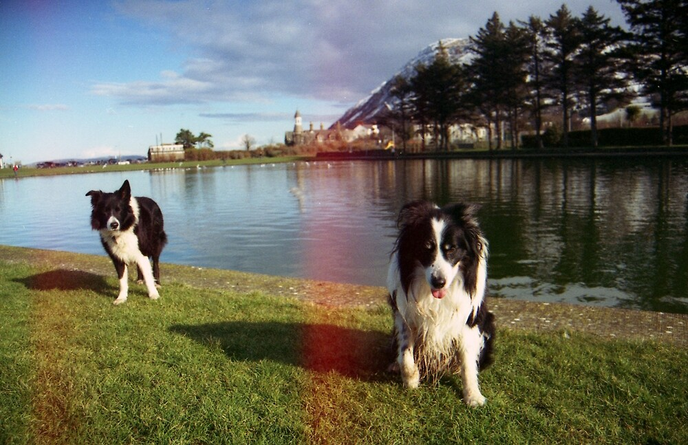 Indy and Rob reunited at Rainbow Bridge. by Michael Haslam
