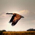 Goose in Flight by Larry Trupp