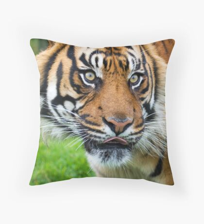 Nias Male Tiger at WHF Throw Pillow